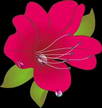 索玛花支教logo.png